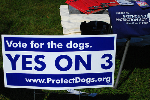 Vote for the Dogs